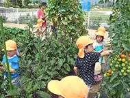 園の畑で大収穫